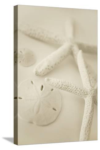 Ocean Treasures VI-Karyn Millet-Stretched Canvas Print