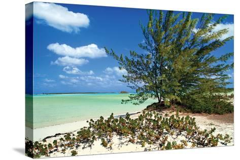 Sand Dollar Beach-Larry Malvin-Stretched Canvas Print