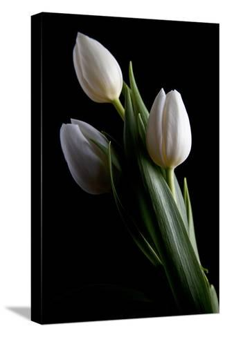 Tulips IV-C^ McNemar-Stretched Canvas Print