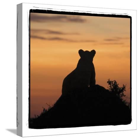 Radiant Africa 3-Susann Parker-Stretched Canvas Print