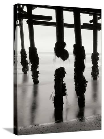 Pier Pilings 10-Lee Peterson-Stretched Canvas Print