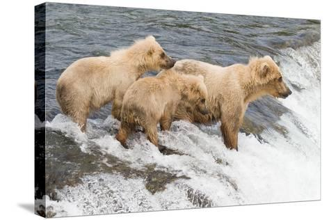 Day at the Falls-Susann Parker-Stretched Canvas Print