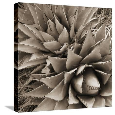 Desert Plants III-Bob Stefko-Stretched Canvas Print