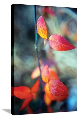Fall Leaves I-Bob Stefko-Stretched Canvas Print