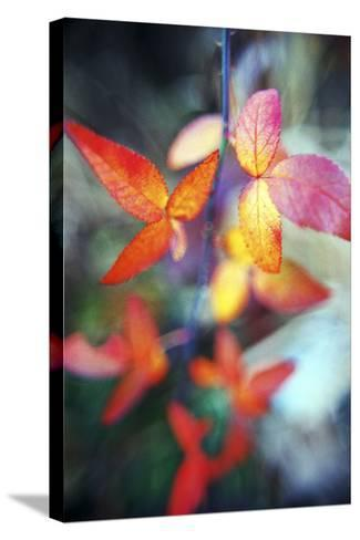 Fall Leaves II-Bob Stefko-Stretched Canvas Print
