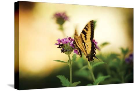 Garden Butterfly III-Philip Clayton-thompson-Stretched Canvas Print
