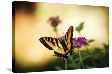 Garden Butterfly IV-Philip Clayton-thompson-Stretched Canvas Print