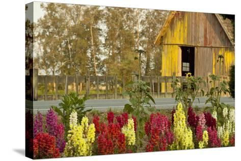 Snapdragons Barn II-Dana Styber-Stretched Canvas Print