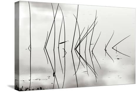 Reeds 1-Lee Peterson-Stretched Canvas Print