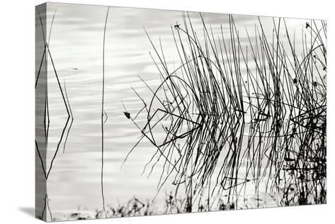 Reeds 2-Lee Peterson-Stretched Canvas Print