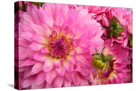 Spring Garden II-Maureen Love-Stretched Canvas Print