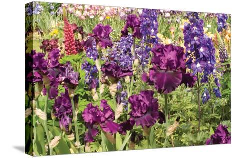 Purple Garden II-Maureen Love-Stretched Canvas Print
