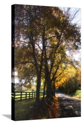 Country Road III-Alan Hausenflock-Stretched Canvas Print