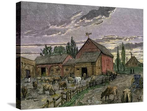 Cattle and Barns of a Canadian Homestead About 1850--Stretched Canvas Print