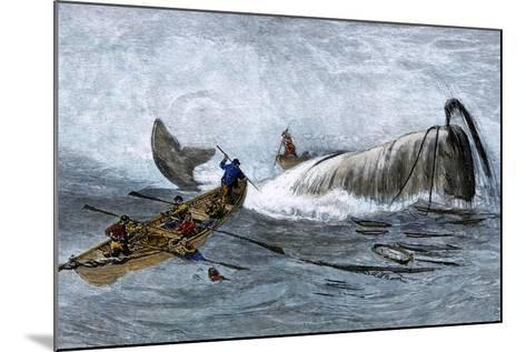 Whalers in Longboats Lancing a Whale with Harpoons, 1800s--Mounted Giclee Print