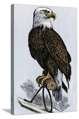 Old Abe, the Bald Eagle Mascot of Wisconsin's Iron Brigade, US Civil War--Stretched Canvas Print