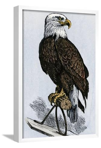 Old Abe, the Bald Eagle Mascot of Wisconsin's Iron Brigade, US Civil War--Framed Art Print