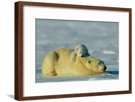 This Young Polar Bear (Ursus Maritimus) Cub Rests Comfortably Atop the Back of His Mother-Norbert Rosing-Framed Art Print