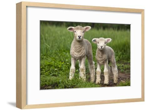 Portrait of Two Cute Baby Sibling Romney Lambs in a Green Pasture-Karine Aigner-Framed Art Print