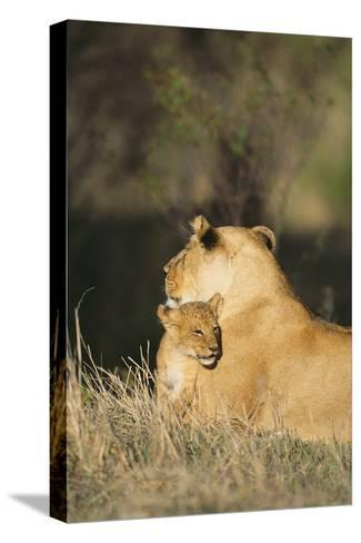 A Lion Cub Nestles Against Its Mother-Norbert Rosing-Stretched Canvas Print