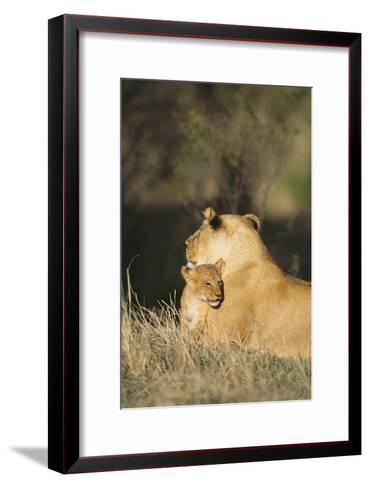 A Lion Cub Nestles Against Its Mother-Norbert Rosing-Framed Art Print
