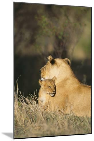 A Lion Cub Nestles Against Its Mother-Norbert Rosing-Mounted Photographic Print