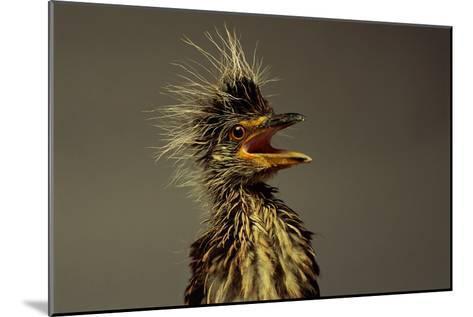 A Juvenile Black-crowned Night Heron-Scott Sroka-Mounted Photographic Print