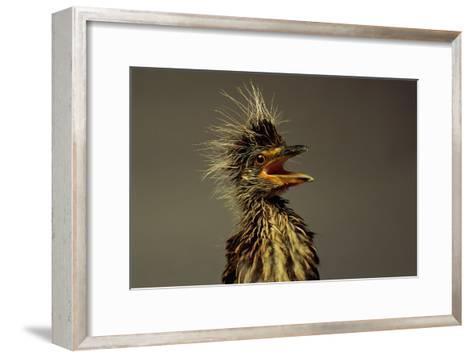 A Juvenile Black-crowned Night Heron-Scott Sroka-Framed Art Print