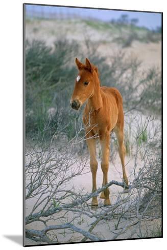 A Wild Pony On the Beach At Chincoteague Island-Scott Sroka-Mounted Photographic Print