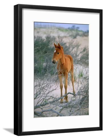 A Wild Pony On the Beach At Chincoteague Island-Scott Sroka-Framed Art Print