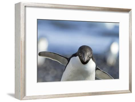 An Adelie Penguin Uses Its Wings As Balance On Rocky Terrain-Ira Block-Framed Art Print