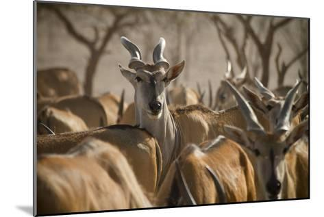 A Taurotragus Oryx Stands Out From the Crowd-Ira Block-Mounted Photographic Print