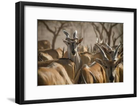 A Taurotragus Oryx Stands Out From the Crowd-Ira Block-Framed Art Print