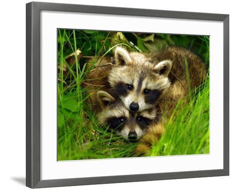 A Portrait of Two Raccoon Kits in Grass-Terri Moore-Framed Art Print