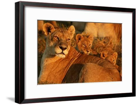 African Lioness, Panthera Leo, and Her Cubs Resting-Beverly Joubert-Framed Art Print