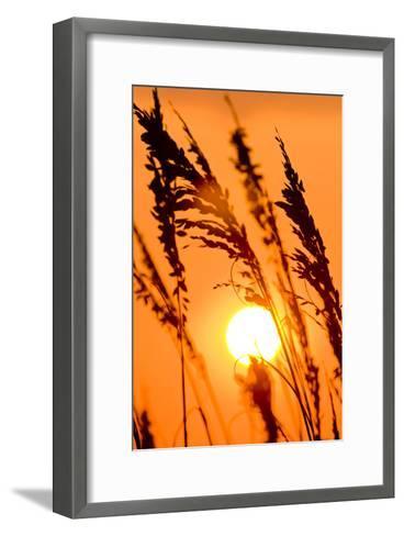 Sea Grass Silhouetted At Sunrise-Brian Gordon Green-Framed Art Print