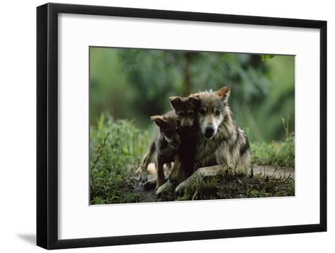 Pups of Captive Mexican Gray Wolves-Joel Sartore-Framed Art Print