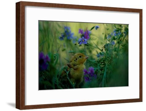 attwater's Prairie Chicken, Young Chick in Flower-Joel Sartore-Framed Art Print
