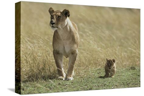 Lioness and Cub-Mark C. Ross-Stretched Canvas Print