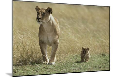 Lioness and Cub-Mark C. Ross-Mounted Photographic Print