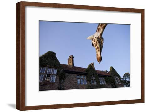 A Rothschild Giraffe Appears to Be Peering Down Upon Giraffe Manor-Robin Moore-Framed Art Print