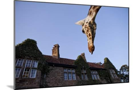 A Rothschild Giraffe Appears to Be Peering Down Upon Giraffe Manor-Robin Moore-Mounted Photographic Print