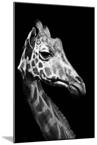 Close Up Portrait of an Endangered Rothschild Giraffe-Robin Moore-Mounted Photographic Print