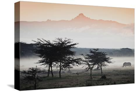 White Rhinos Appear Out of the Mist in Front of Mount Kenya-Robin Moore-Stretched Canvas Print