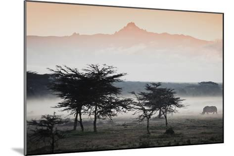 White Rhinos Appear Out of the Mist in Front of Mount Kenya-Robin Moore-Mounted Photographic Print