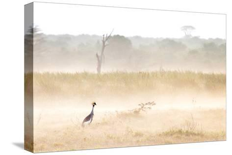 A Crested Crane Stands Out On an Ethereal Misty Morning-Robin Moore-Stretched Canvas Print