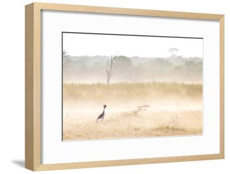 A Crested Crane Stands Out On an Ethereal Misty Morning-Robin Moore-Framed Art Print