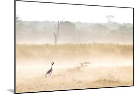 A Crested Crane Stands Out On an Ethereal Misty Morning-Robin Moore-Mounted Photographic Print