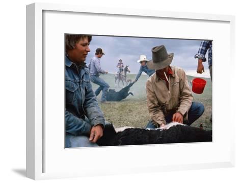 A Cowboy Castrates a Young Calf, While Behind Him Two Others Wrestle a Calf to the Ground.-Sam Abell-Framed Art Print