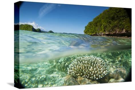 The Sea Floor of Palau's Rock Islands-Stephen Alvarez-Stretched Canvas Print